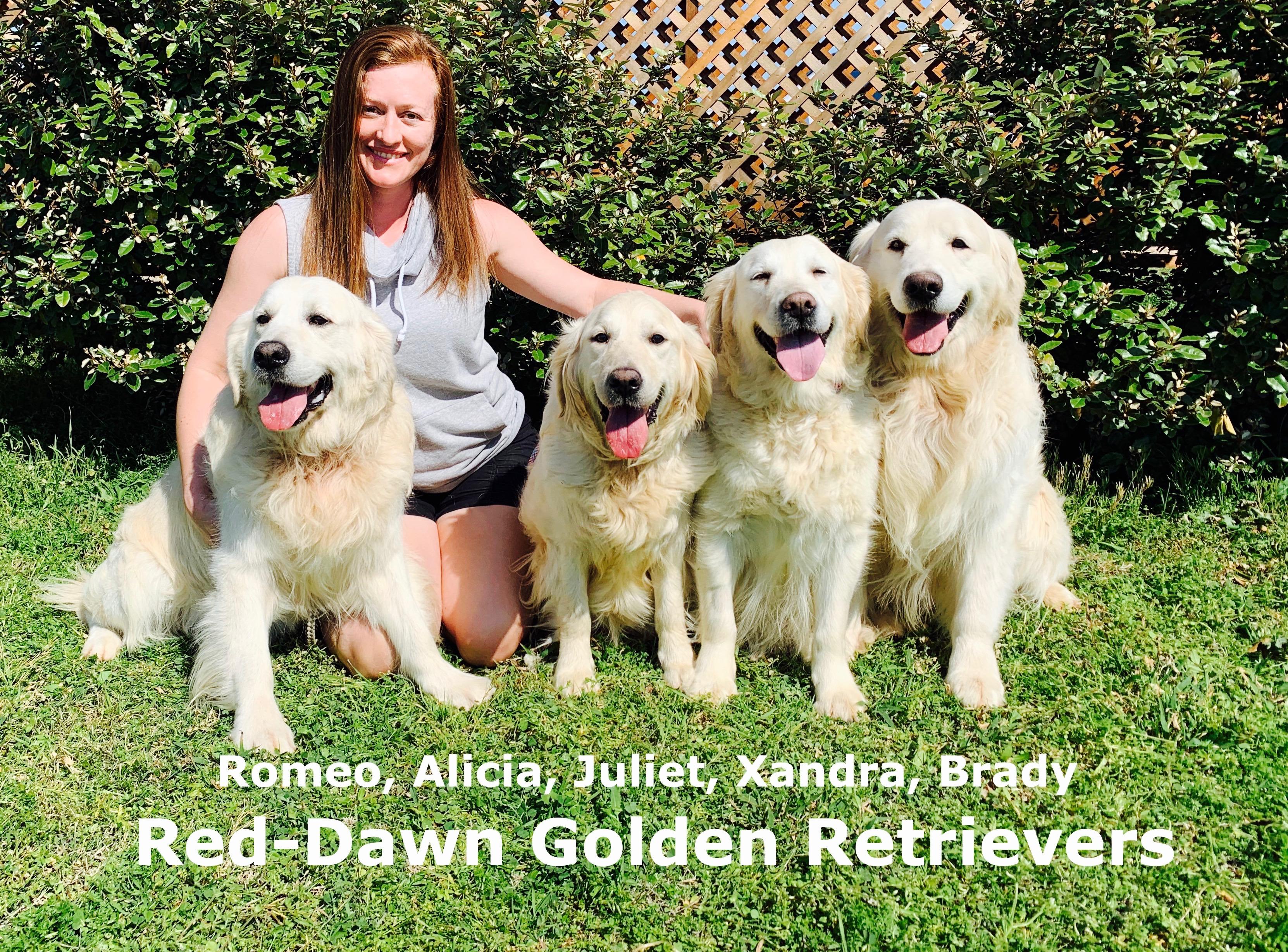 Golden Retriever Breeder in Dallas Texas | Red-Dawn Golden